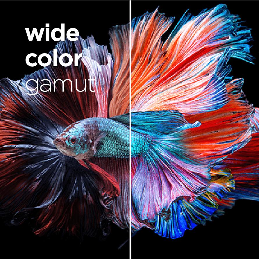 Accurate & Vibrant Colors